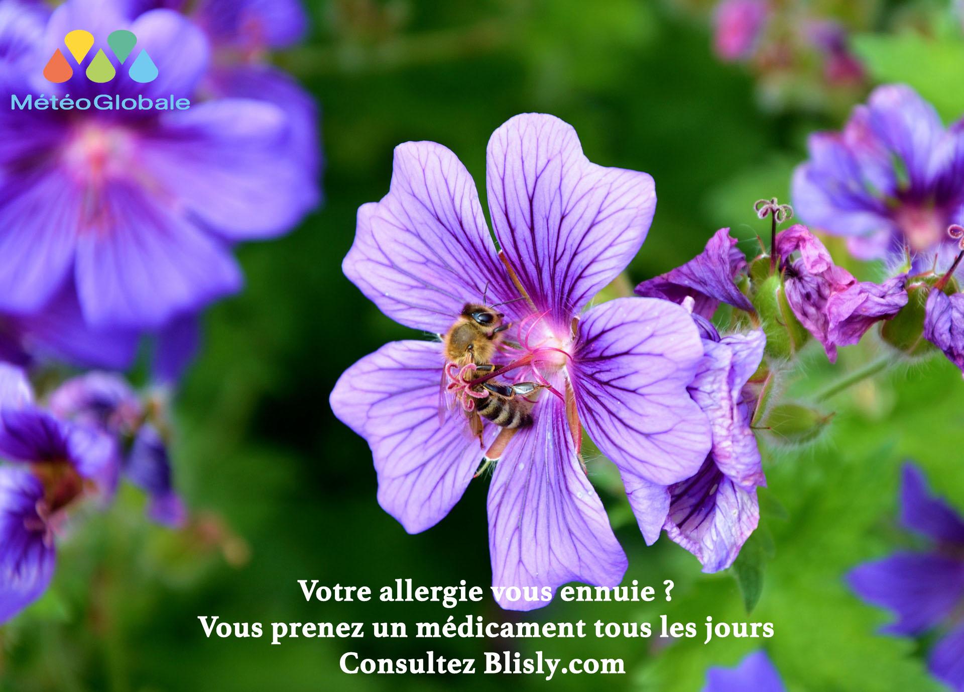 saison des pollens