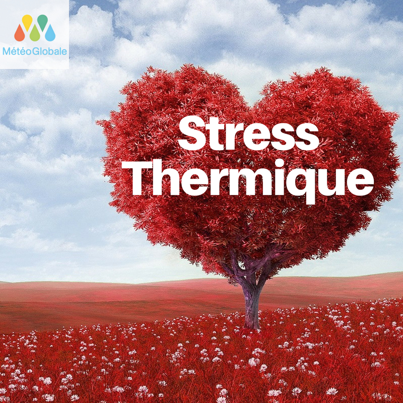 Stress Thermique
